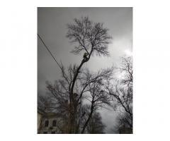 Профессиональная обрезка и удаление деревьев.