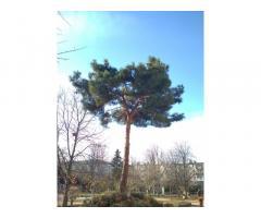 Профессиональная обрезка и удаление деревьев!